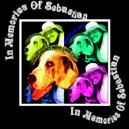 freetoedit doglove doglover🐕 dog@reneharris doglover