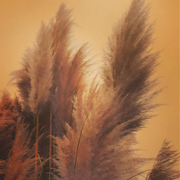 warmth summertime nature hotweather goldenhour freetoedit