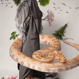 freetoedit wildlife savetheplanet lion snake