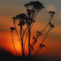 nature endoftheday sunsettime warmdays summertime freetoedit