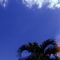 palms freetoedit aesthetic huji huphoto