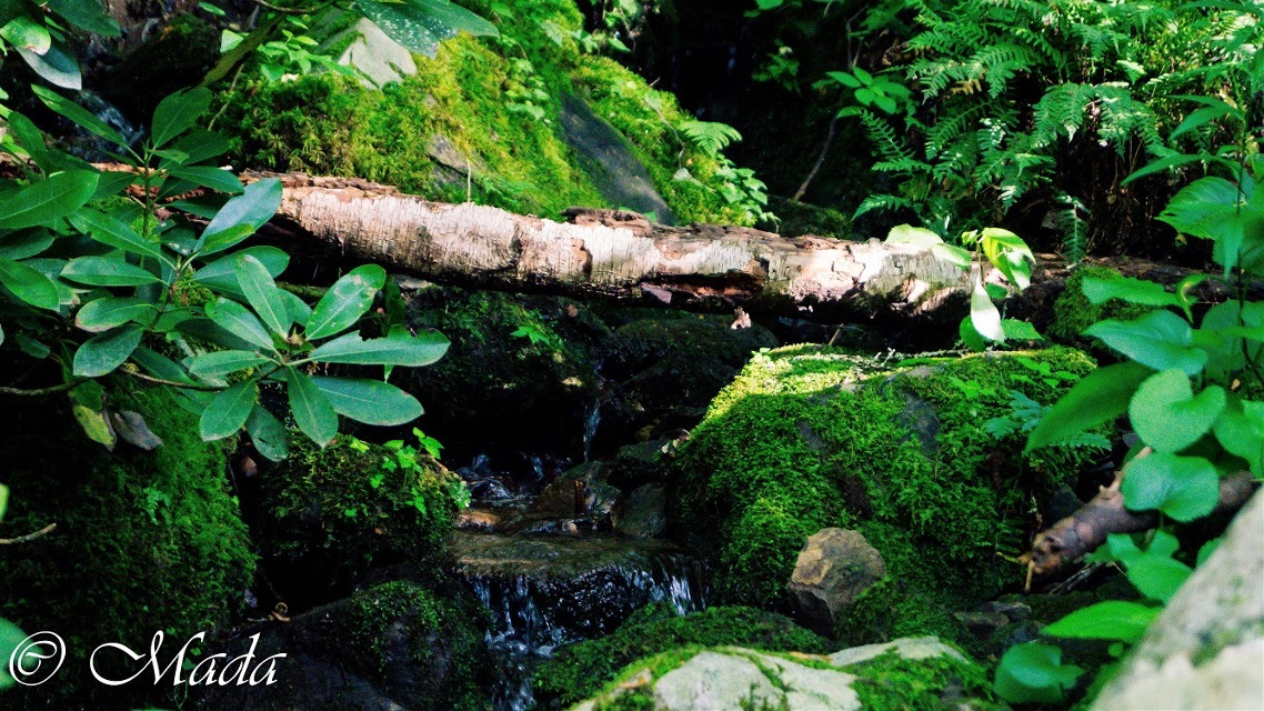 #nature #interesting #photography #summer #green #moss #freetoedit #beautiful