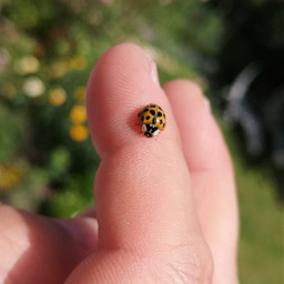 freetoedit beetle tiny insect myphotography
