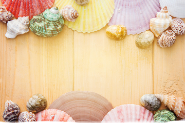 freetoedit shell conch background setting