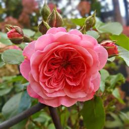 freetoedit bunia0914 myphoto garden mygarden