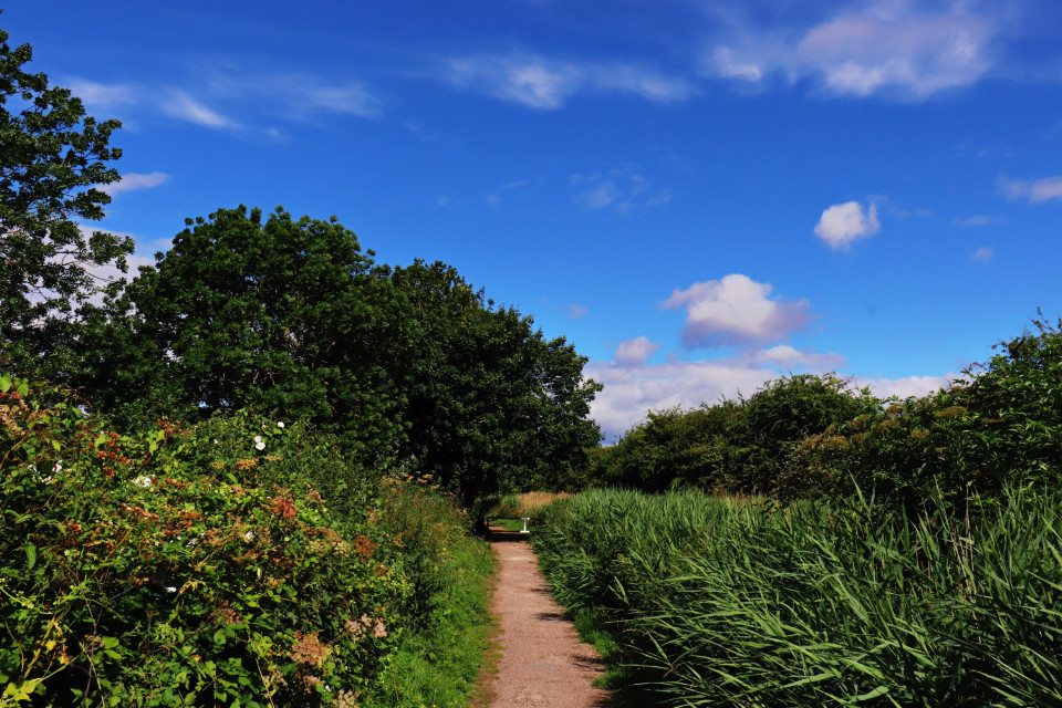 Just liked this view  #canalside #trees #skyandclouds #pathway #colourful #vibrant  #freetoedit