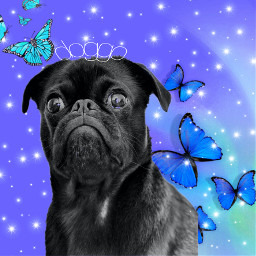 freetoedit doggo cute pug sparkle