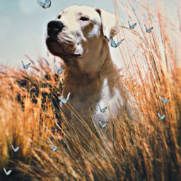 freetoedit dog butterfly grass animals ftestickers