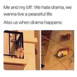 meme freetoedit funny drama cat