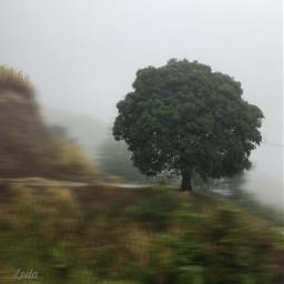 freetoedit ontheroad trees nature fog