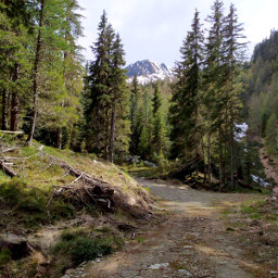 nature forest trees mountains italy freetoedit
