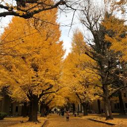 freetoedit yellow japan