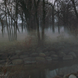 freetoedit myphotography fog forest creepy
