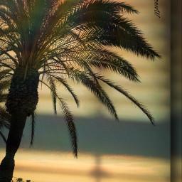 summer summervibes shadoweffect shadowmask goldenhour freetoedit