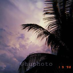 aesthetic huji cute palms freetoedit