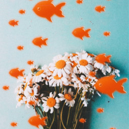 fishes flowers daisys daisyflower freetoedit