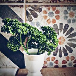 herbs green kitchen freetoedit