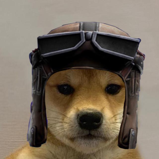 Renegade Raider Dog.... Igore Tags.... #freetoedit #fortnite #renegaderaider #shibainudog #meme