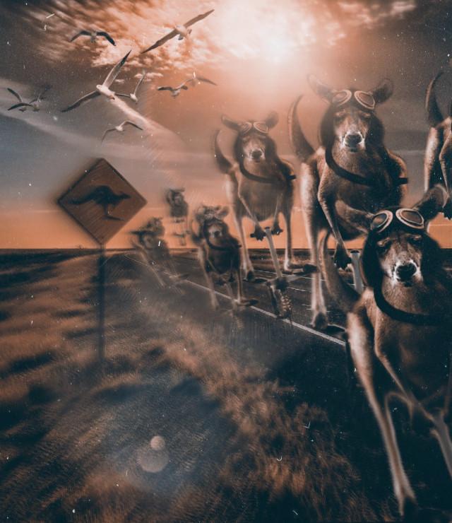 #freetoedit #picsart #remixed #remixit #myedit #photoedit #photomanipulation #art #digital #digitalart #digitaledit #madewithpicsart #editedbyme #editedwithpicsart #surreal #surrealism #magical #magic #fantasy #stayinspired #shapes #picsarteffects #lighteffects #unsplash #pexels #shutterstock #pastickers #kangaroo #australia #road #sign #sunlight #playtime