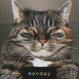 freetoedit cat picsart кот пиксарт