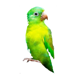 freetoedit bird parrot green animal