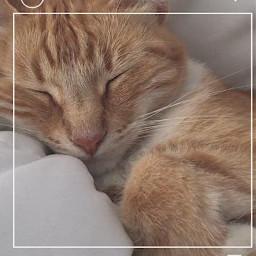 freetoedit catsofpicsart sleeping cutepets instastory