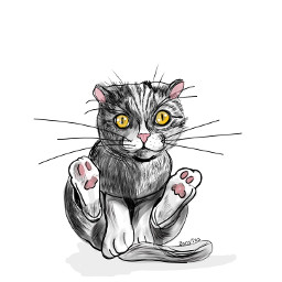 freetoedit draw cats kitty outline