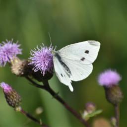 freetoedit photography naturephotography naturelovers butterlfy