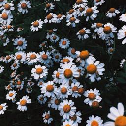 flower flowerpower xoxo cool summervibes