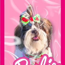 freetoedit shihtzu dog pet barbie