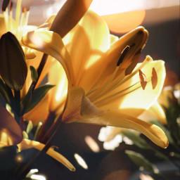 freetoedit flower flowers flowerphotography nature