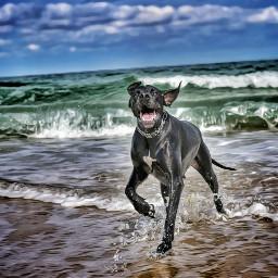 dog nature chien sea e-go freetoedit
