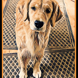 freetoedit doggy cutepets cuteanimals