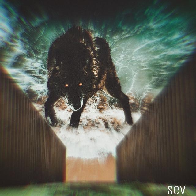 #freetoedit #surreal #manipulation #wolf #focusblur #blureffect #sea #madewithpicsart #myedit