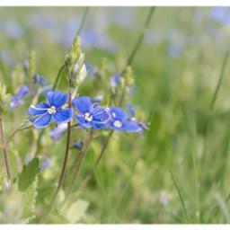 meadow flowers nature freetoedit