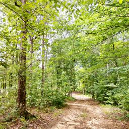 freetoedit nature outdoors naturelover myphoyo