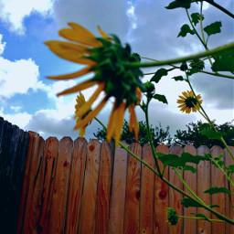 garden flowers fence sky clouds