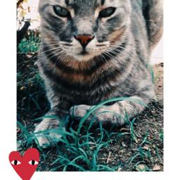 animals naturelover cute cats beautifullife