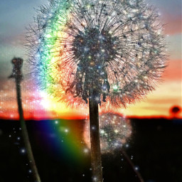 freetoedit dandelion wishes pretty sky rcsummersparkle summersparkle