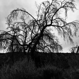 deadwood hikelife blackandwhite leave less