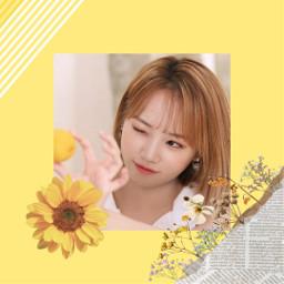 freetoedit chaewon kimchaewon izone izonechaewon