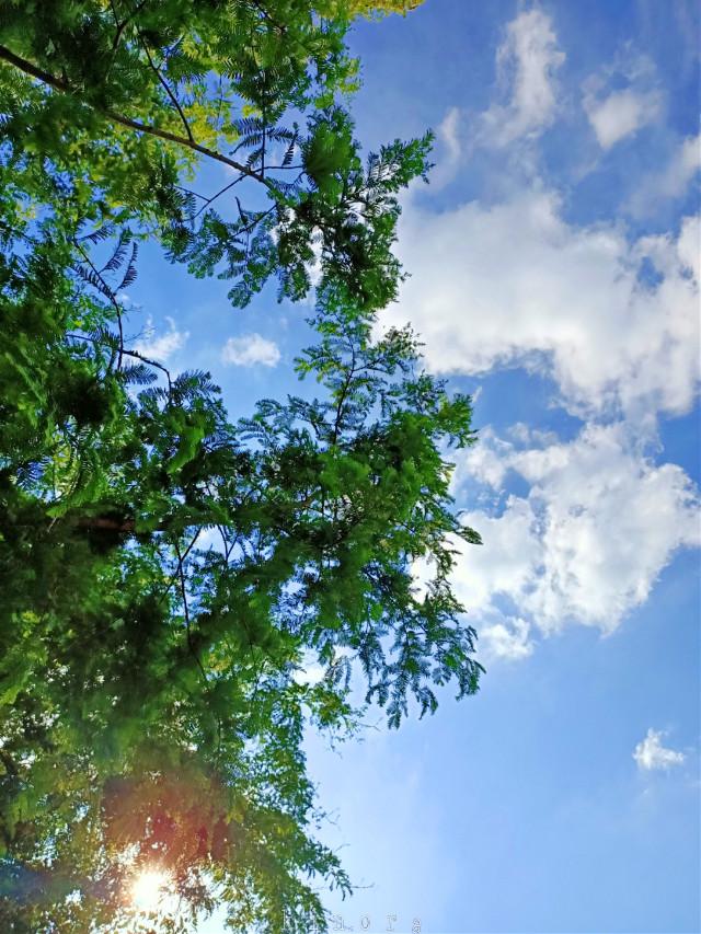 #freetoedit #tree #sunny #bluesky #clouds #myphoto #kinora