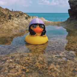sea beach summer biker duck freetoedit