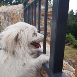 freetoedit doglove