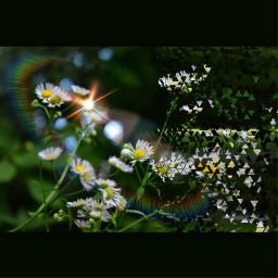 naturebeauty photography edit freetoedit