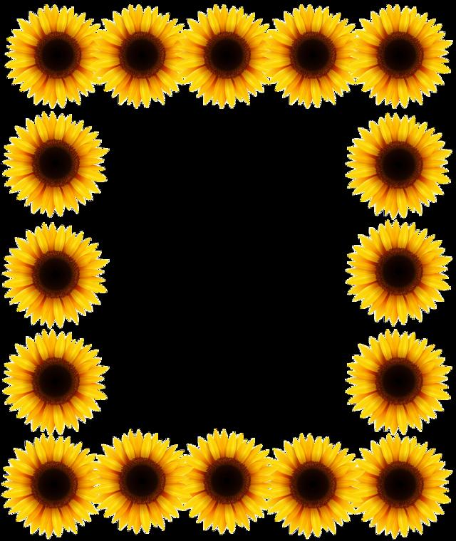 Marco de Girasol #marcosparafotos #marcodeflores #marcodegirasol #marco   #girasol #girassol #girassol🌻  #girasol🌻 #girasole  #girasoles🌻 #girasoles  #framework  #frameworksunflower #sunflower #sunflowers #sunflowersticker #framephotograph #framedpicture #stickers  #freetoedit