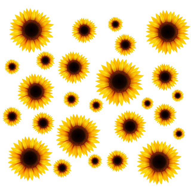 Marco de Girasol #marcosparafotos #marcodeflores #marcodegirasol #marco   #girasol #girassol #girassol🌻  #girasol🌻 #girasole  #girasoles🌻 #girasoles  #framework  #frameworksunflower #sunflower #sunflowers #sunflowersticker #framephotograph #framedpicture #stickers  #freetoedit