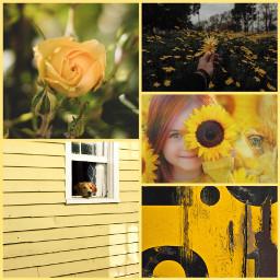 yellow freetoedit ccyellowaesthetic yellowaesthetic