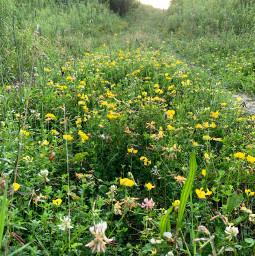 nature naturephotography naturelovers naturalbeauty plants