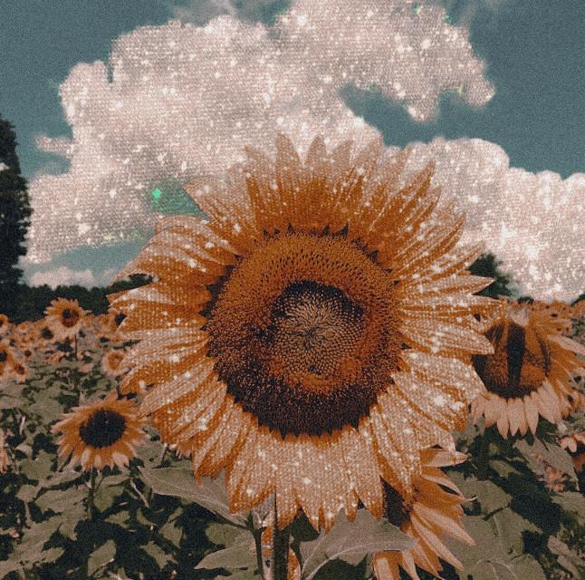 #freetoedit #remixit #madewithpicsart #sunflower #flowers #nature #aesthetic #photography #art #boujee #summer #sunlight #sky #glitter #sparkles #classy